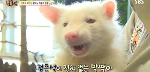 알비노 동물, 하얀 얼굴 뒤 감춰진 슬픔