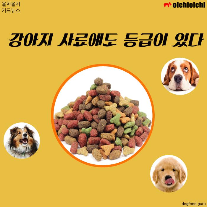 (카드뉴스) 우리 강아지는 어떤 등급의 사료를 먹고 있나요?