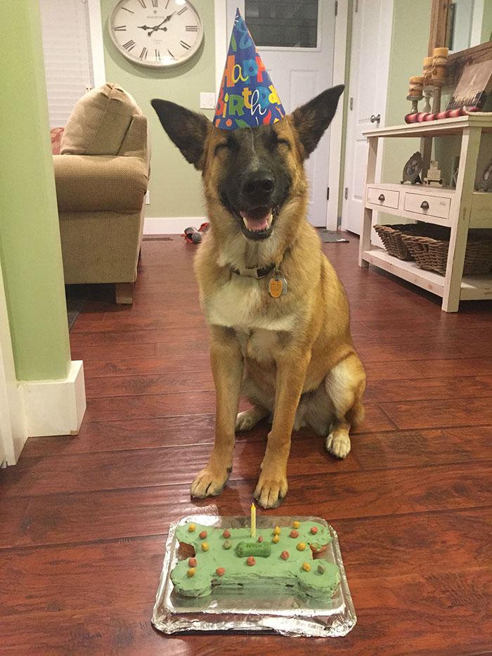 특별한 생일을 맞은 동물들