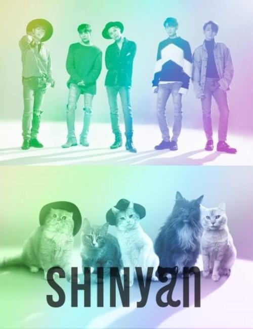 5마리 고양이로 구성된 '샤이냥', 일본에서 가수 데뷔