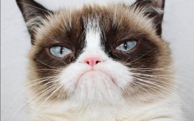 (카드뉴스) 1,000억 고양이 '그럼피 캣'을 아시나요?