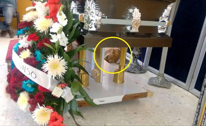 암으로 죽은 주인의 장례식장에 나타난 반려견