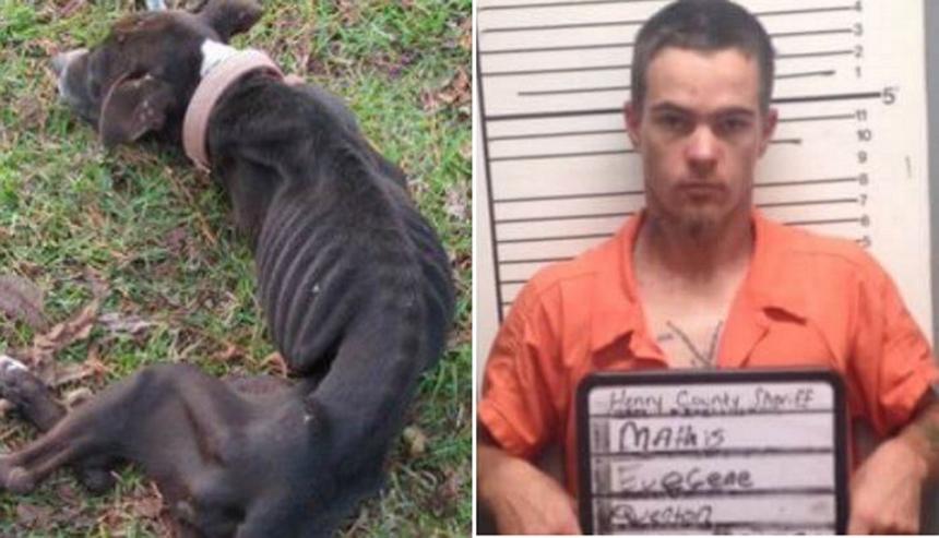강아지 굶겨죽여 징역 6년형 선고 받은 남성