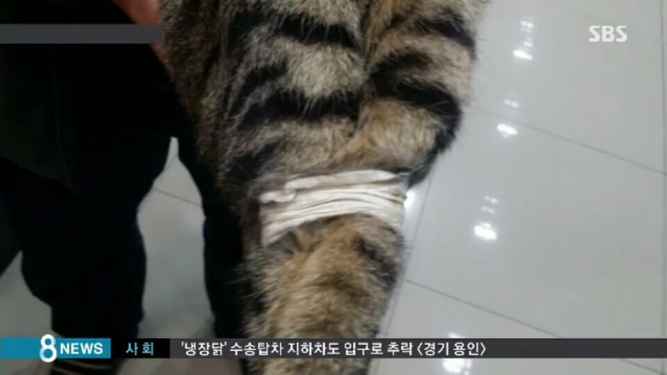 네 다리 묶여 쓰레기통에 버려진 고양이 … 학대까지!
