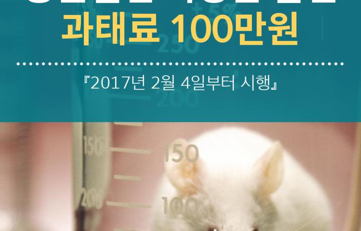 내년 2월부터 동물실험 화장품 판매·유통시 과태료 100만원