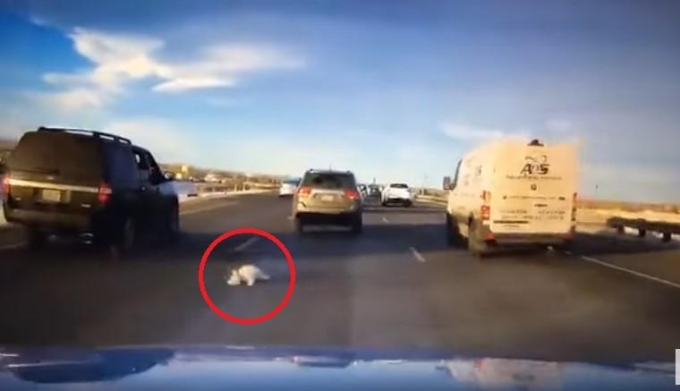 (영상) 고속도로에서 갑자기 창 밖으로 뛰어내린 강아지