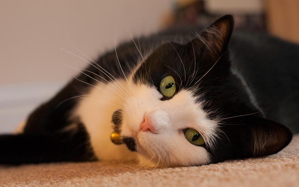 """(연구결과) """"고양이와 정신병 유발 확률은 무관하다"""""""
