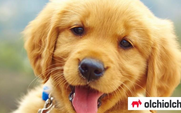 오늘은 '국제 강아지의 날' … 추억만들기 5!