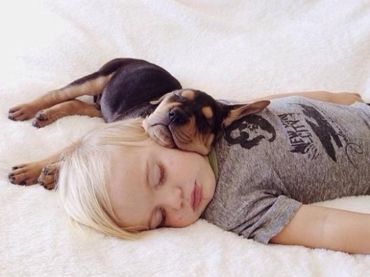 강아지 눈 맞춰주고 안아주면 사랑 호르몬 발생