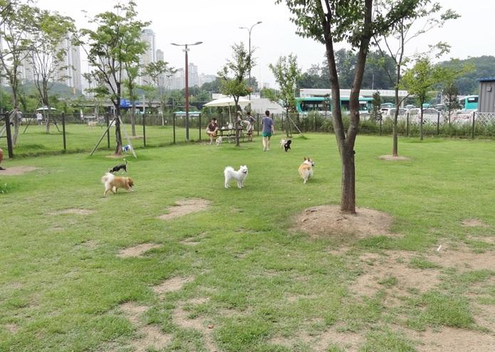 수원시 '반려동물 돌봄센터' 건립