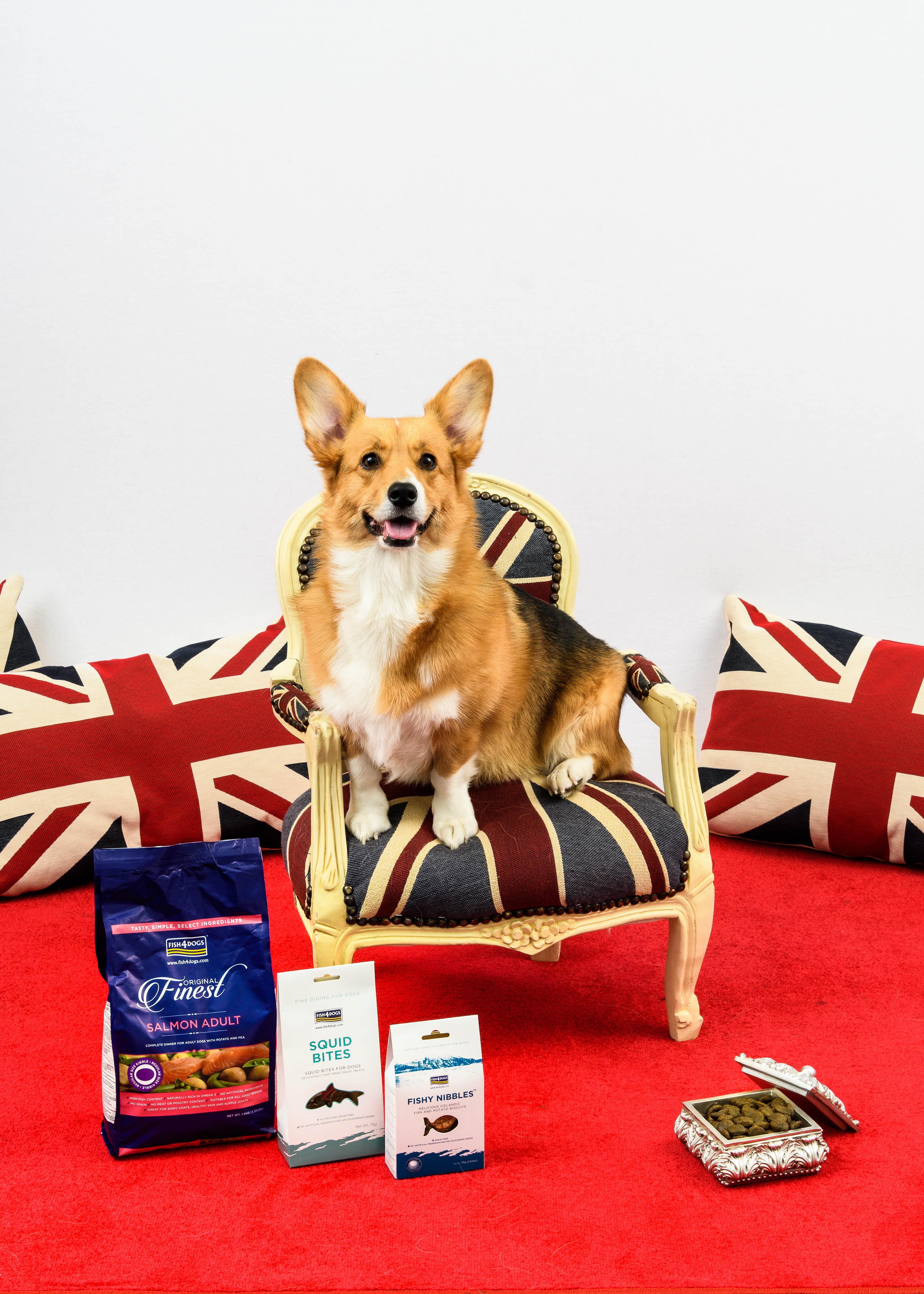 피쉬포독(Fish4Dogs) 사료, 영국 Queen's Award 수상