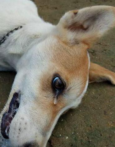 """(영상) """"누가 개 밥에 쥐약을!""""…고통스럽게 죽어간 강아지"""