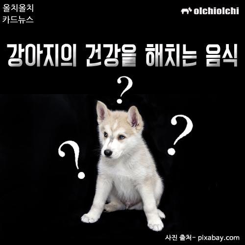 (카드뉴스) 강아지의 건강을 해치는 음식은?
