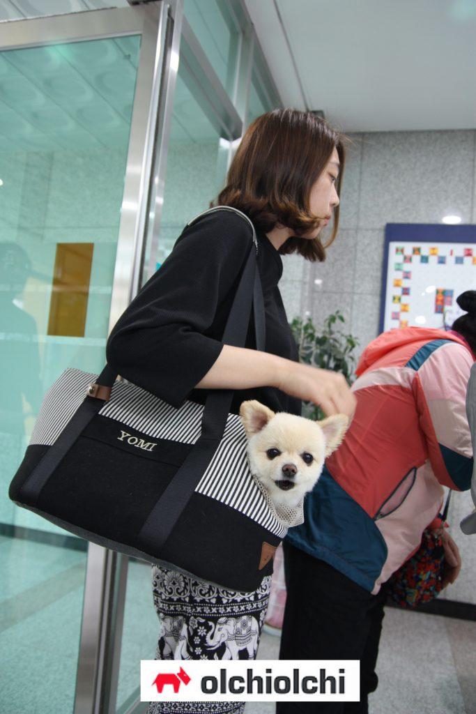 사진=다른 투표자들에게 방해가 되지 않도록 슬링백에 들어가 있는 강아지와 반려인