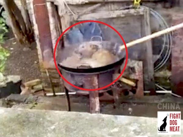 사진=Fight Dog Meat(이하)