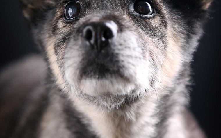 동물권단체 케어, 제2의 토리를 위한 입양 릴레이 캠페인 시작