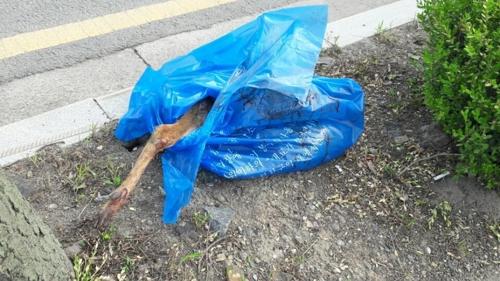사진=쓰레기 봉투에 넣은 고라니 사체(강남구 제공)