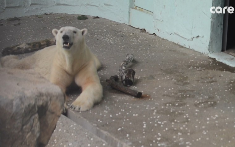 (영상) 북극곰 '통키'의 고통과 절절한 외로움…이게 최선입니까?