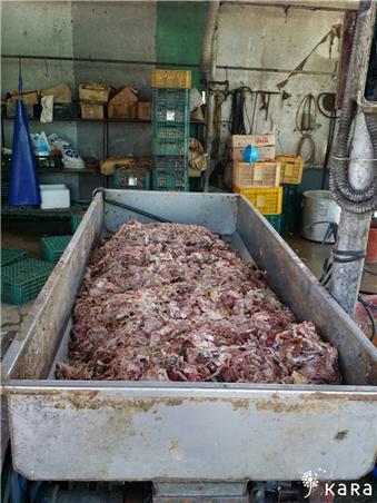 사진=개농장에서 축산폐기물 급여 준비중인 모습(카라 제공)