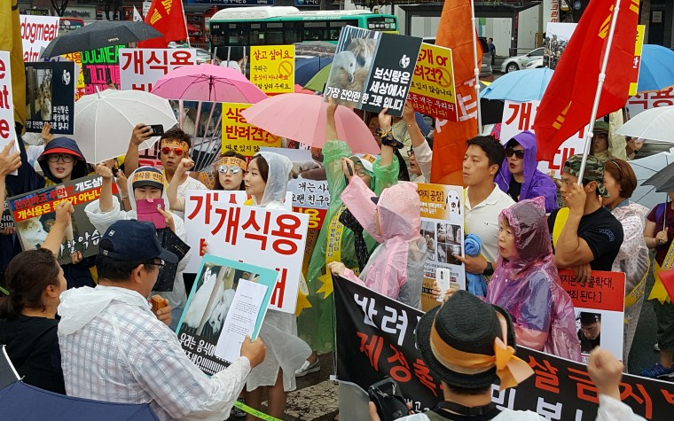 """(영상) 동물보호단체, """"성남 모란개시장 전업 및 철폐하라"""""""
