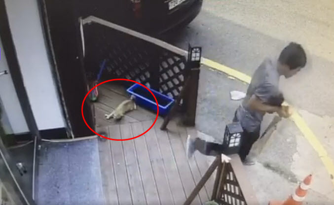 인천 공방 길고양이 살해범에 벌금 600만원 선고