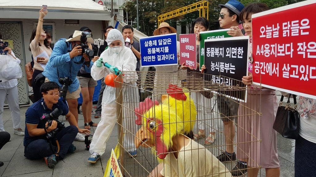 사진=닭에게 살충제를 뿌리는 퍼포먼스