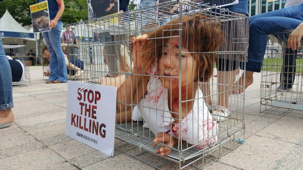 사진=철창안에 갇힌 식용견들의 고통을 표현하는 활동가