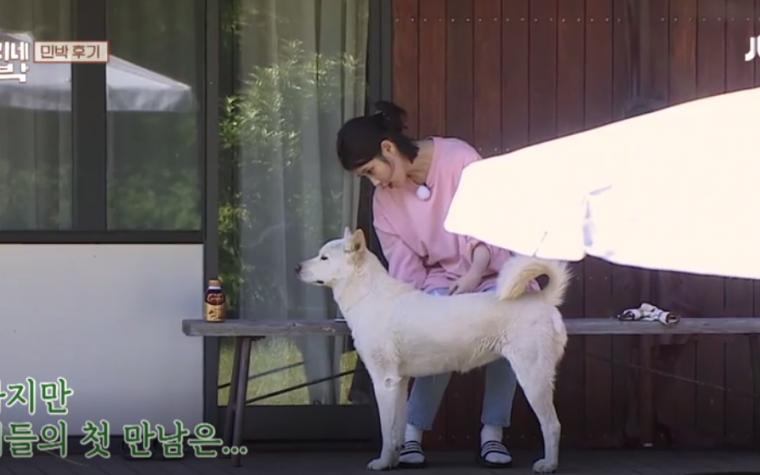 """'효리네 민박', 아이유 """"오뉴오뉴오뉴~"""" 구아나와 아쉬운 이별"""