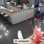 사진=CCTV 영상 캡쳐(이하)