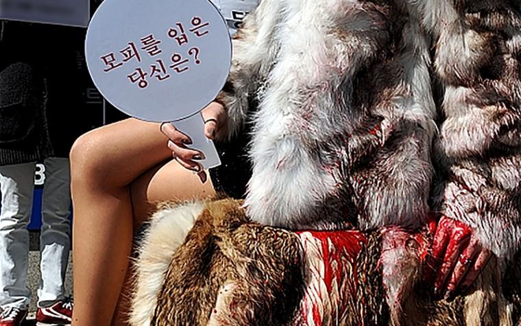 케어, 구찌  '퍼 프리(Fur Free)' 선언 환영