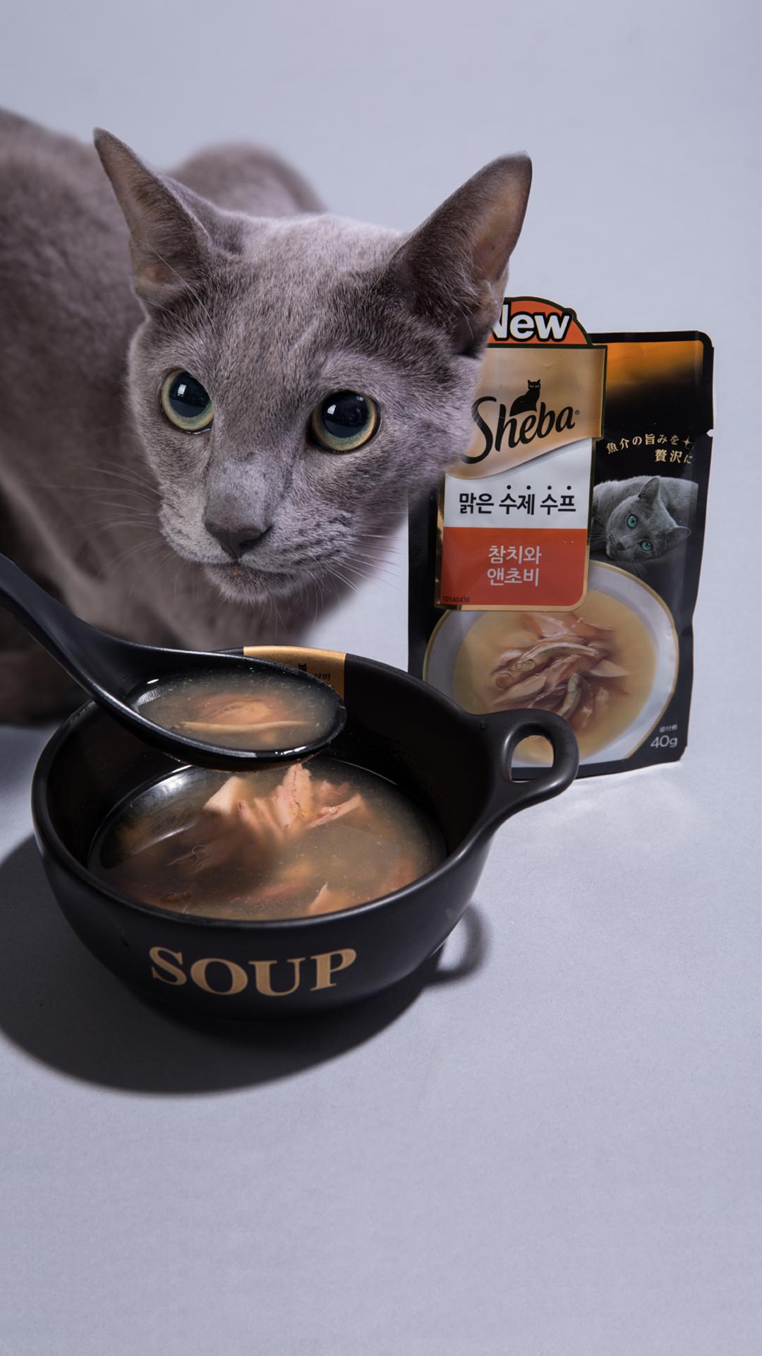 고양이에게 물을 더 맛있게 먹이는 방법…고양이 수프 추천