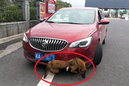 사고로 범퍼에 낀 강아지 매달고 고속도로 달린 여성