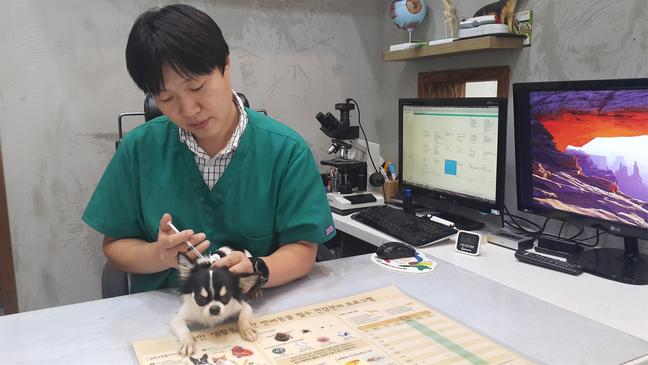 세종시, 21일까지 반려동물 광견병 예방접종 실시