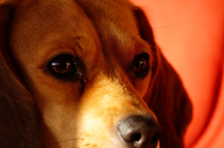 개에게 1년간 매일 농약 먹이는 실험을 아시나요?