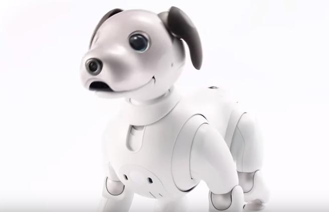 (영상) 소니, 로봇 반려견 '아이보'…실제 강아지와 싱크로율은?