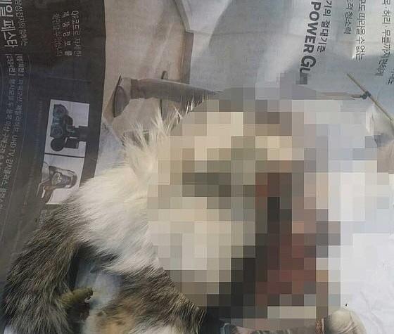부천서 잔인하게 살해된 길고양이 사체 잇따라 발견…경찰 수사 중