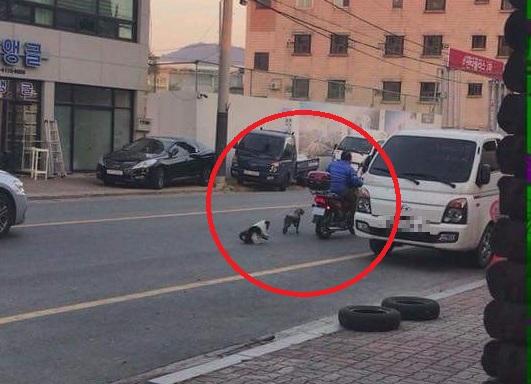 오토바이에 강아지 2마리 줄로 묶어 끌고 다닌 60대 남성