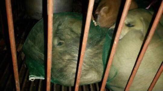 사진=동물권단체 케어 페이스북