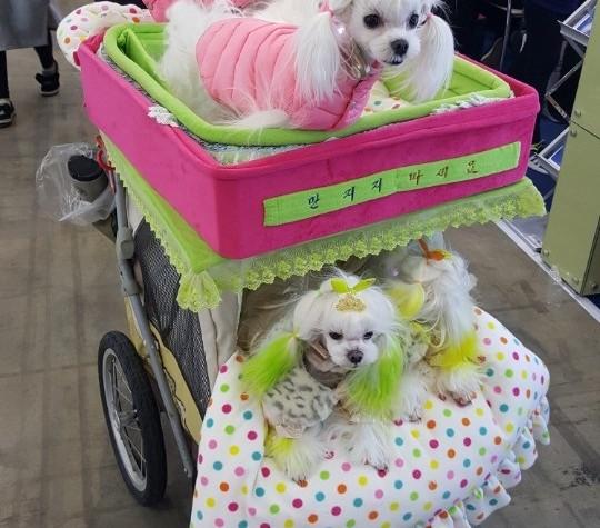 [올치올치 포토] 케이펫페어에 장보러 나온 강아지들