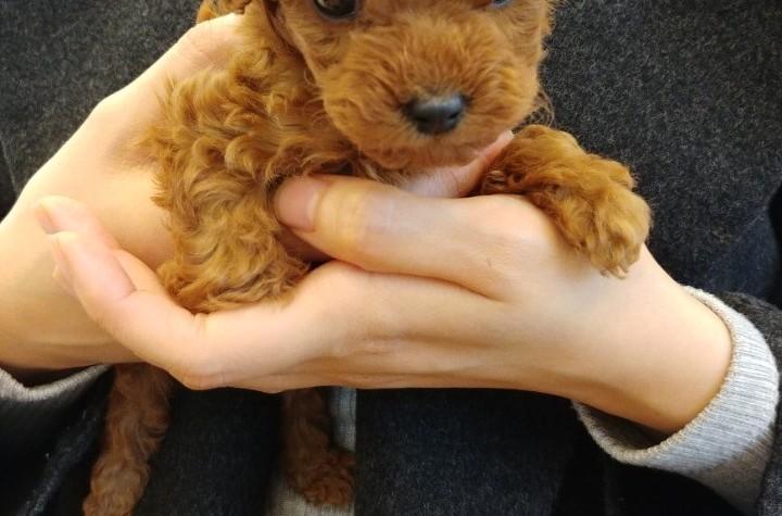 """(단독) 입양 4일만에 폐사한 강아지…분양업체 """"생명장사인데 한 두번도 아니고.."""""""