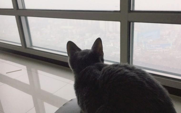 눈이 마냥 신기한 고양이…집 부러움 주의