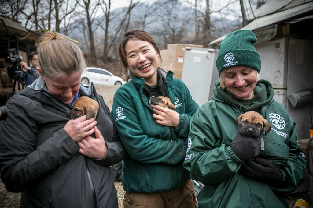 South Korea Dog Meat Farm Rescue (Farm 10)
