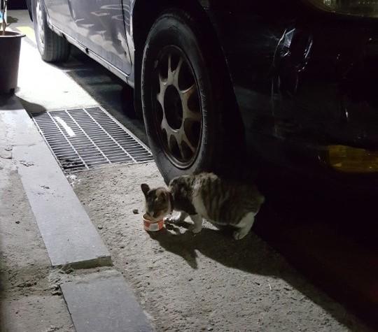 [올치올치 포토] 추위 속 조심조심 캔 먹는 새끼 고양이