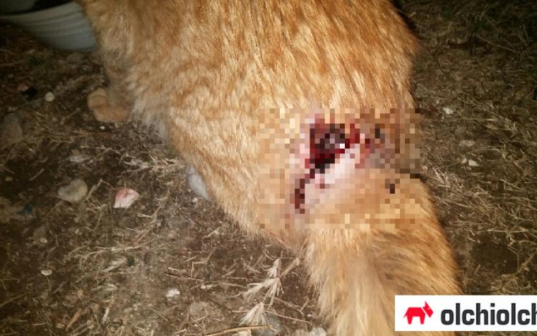 부산서 꼬리 잘리고 척추 손상된 길고양이 발견…경찰에 수사 의뢰
