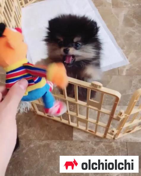 사진=방탄소년단 SNS 영상 캡쳐(이하)