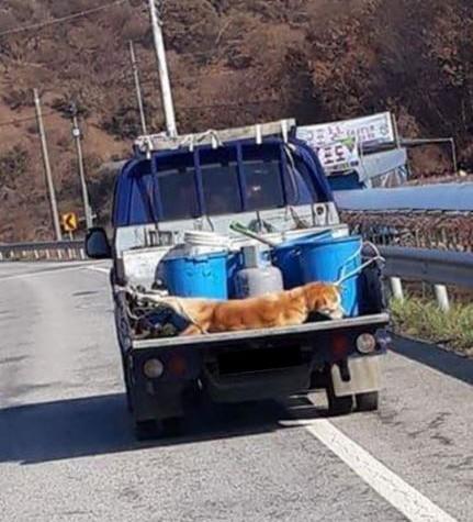 일명 '청양 악마트럭' 사건…트럭운전사 검찰에 기소의견 송치