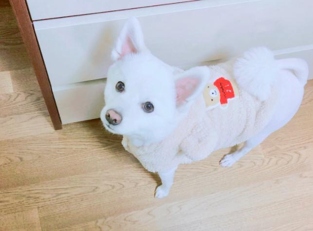 방탄소년단 RM, 반려견 '랩몬' 사진에 발가락은 팬 서비스