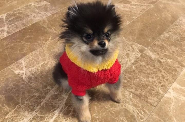 """방탄소년단 뷔의 간절함, """"한번만 찍을게~"""""""