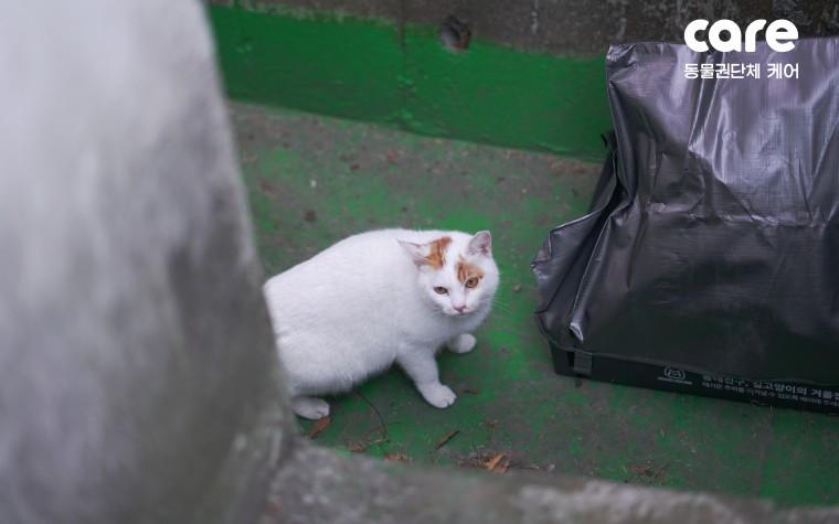 케어, 장수마을에 길고양이 위한 '후드하우스' 설치