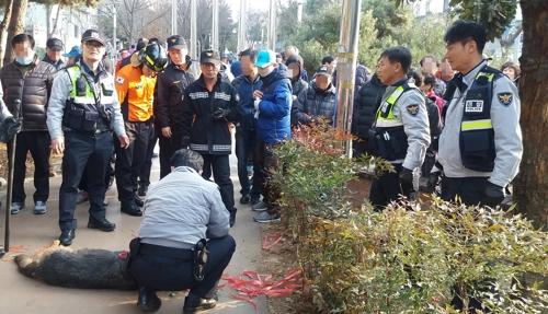 사진=광주 푸른길공원 셰퍼드 포획 현장 모습